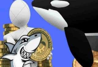 نهنگهای بیت کوین یک سوم داراییهای این ارز را در اختیار دارند
