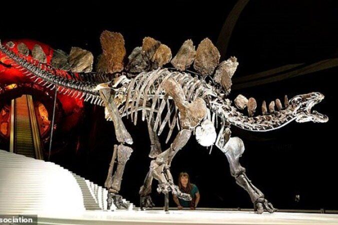کشف قدیمیترین گونه دایناسور در آفریقا